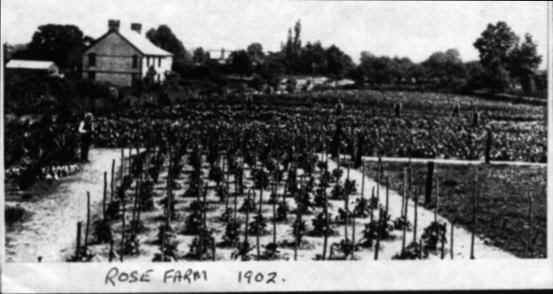 Black and white photo of Rose Farm, Henlade (1902)